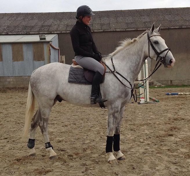 SOLD TO LEXINGTON, KENTUCKY USA 2013. Four year old ISH gelding.