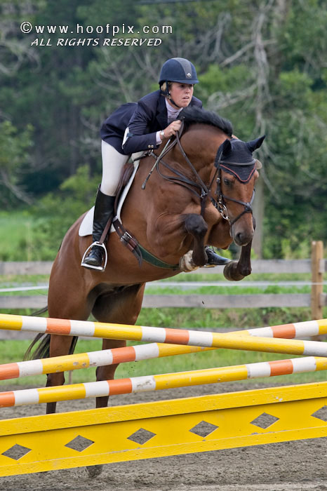 Waterford VDL 2003 16.1hh Dutch Warmblood gelding by Corland out of a Nimmerdor mare, imported from VDL in Holland in 2006. Reserve Champion in Holland in his stallion testing in 2006. Sold to Lexington, KY and now showing in the Hunter ring.