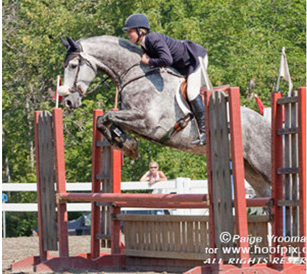 Killagha Macs © Photo by Hoofpix. 2002 17hh ISH gelding by Ard Ohio, imported from Ireland. After a brief introduction to eventing, sold on to the jumper ring in 2010.